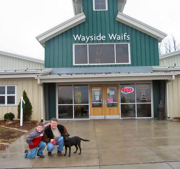 Adopting our lab Hally at Wayside Waifs